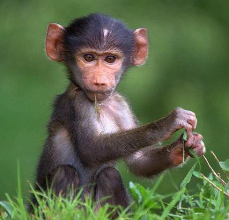 cikkek-termekajanlo-farkasok-es-majmok-hellodog-kutyatapok-eu1