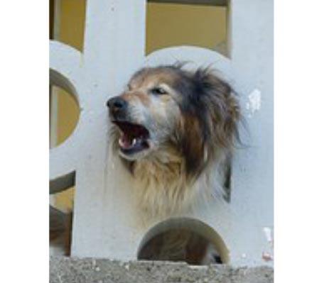 mit-ugat-a-kutyam1-cikkek-termekajanlok-hellodog-kutyatapok.eu