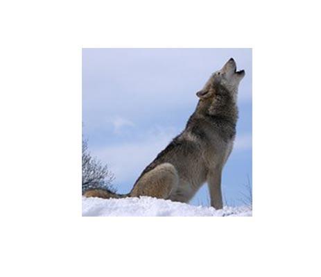 mit-ugat-a-kutyam2-cikkek-termekajanlok-hellodog-kutyatapok-eu
