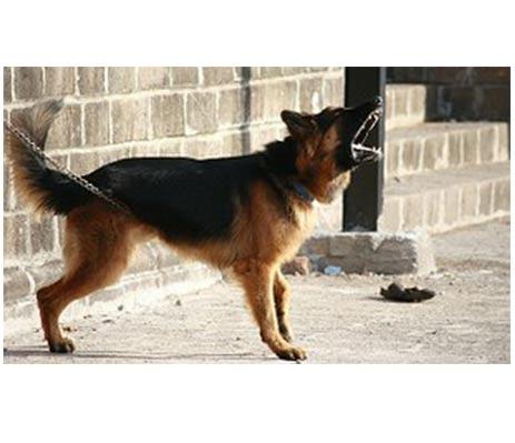 mit-ugat-a-kutyam3-cikkek-termekajanlok-hellodog-kutyatapok-eu