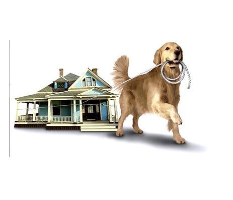 mit-ugat-a-kutyam4-cikkek-termekajanlok-hellodog-kutyatapok-eu